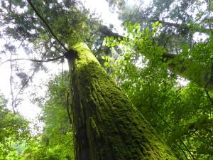 高尾山の森